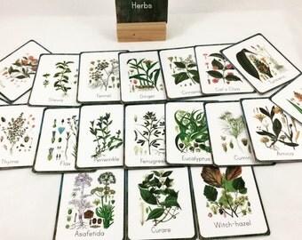Rainforest medicinal herbs cards, medicinal herbs cards
