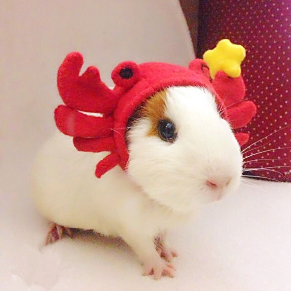 Guinea Pig Costume Lobster Hat Passion Red By Crafted4Pets