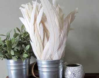 White Rooster Feathers