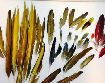 Mix of 27 Damage Feathers