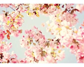 Cherry Blossom Golden Glow