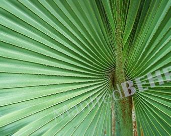 Palm Leaf Photography Canvas Wrap, Fine Art Photography Canvas Print, Green Plant Wall Art, Botanical Print on Canvas