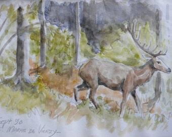 """Watercolor: """"the deer"""""""