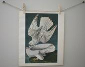 Vintage Audubon Bird Art Print: ICELAND FALCON Lithograph Large 17X14 / Excellent Condition / Blue White Gray Wall Art Decor