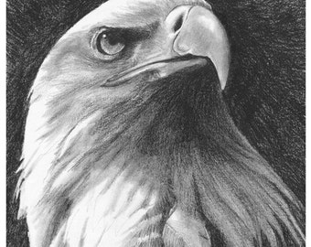 American Eagle (Mounted Print)