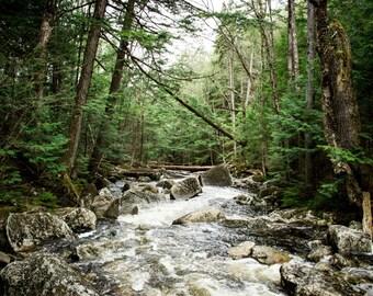 River - River Photo - Forest - Forest Photo - Riverside - Landscape Prints - Digital Photo - Digital Download - Instant Download - Wall Art
