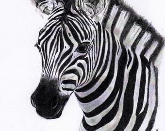 Zebra 11x14 charcoal print black and white Zebra wall art Zebra art print Zebra picture Zebra drawing