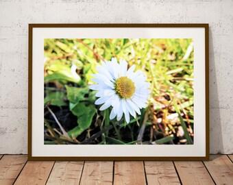 Field Daisy | Daisy, Daisy Photography, Daisy Wall Art, Daisy Print, Daisy Art, Daisy Flower, Daisy Decor, Flower Art, Flower Art Print