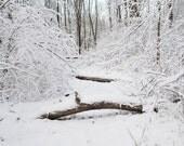 Snowy Fallen Trees Photograph - landscape photography, landscape photo
