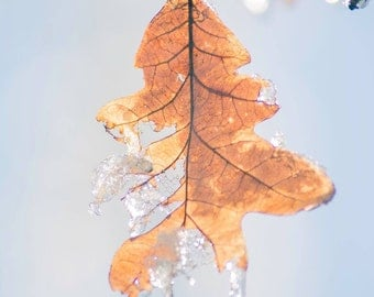 A leaf frozen in time