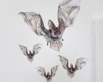 Bat decals, bat wall stickers, wildlife decals, bat illustration, fledermaus, bat gifts - *10% proceeds donated to Bat Conservation Trust*