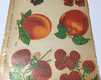 Vintage transfer decals of fruit