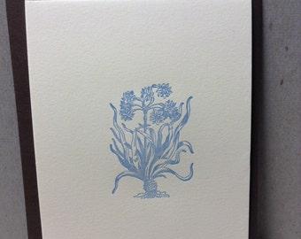 Amaryllis 2 Card