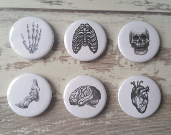 Set of 6 Anatomical Button Badges | 25mm