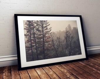 Sierra Nevada Trees - Fine Art Print - 8x10 11x16, Landscape Photograph