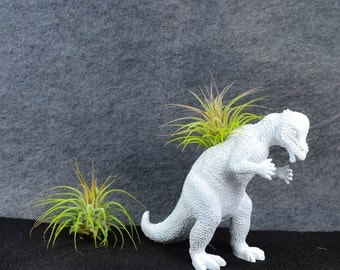 Any Color Plantasaurus / Pachycephalosaurus Dinosaur Planter with Air Plant, Air Plant Holder, Dino Planter, Low Shipping, Great Gifts!
