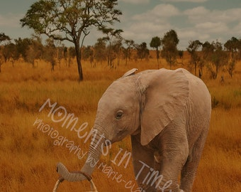 MIT Baby Elephant Carrying A Basket Digital Background