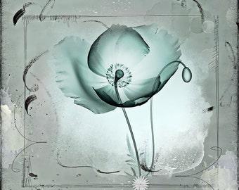 Flower art print, flower art photography, Poppy Flower art print, Poppy X-Ray print, Nature Photography, Print Art Design, Digital design