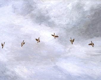Birds fly in the sky