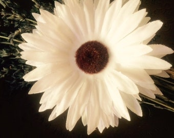 White sunflower hair clip