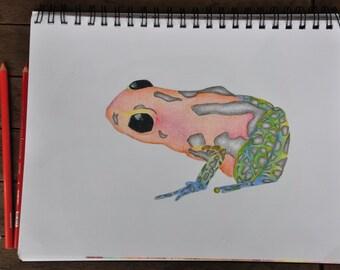 Custom Reptile/Amphibian Drawing