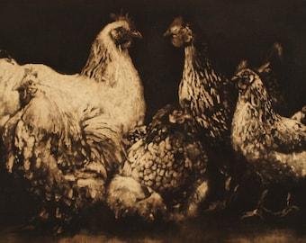 Hen Rooster chicken