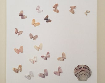 Butterfly Shells and Scallop on canvas
