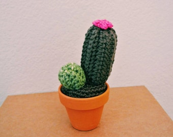 The green cactus