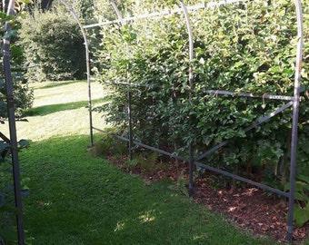 Garden arch / Rose arbor / Pergola