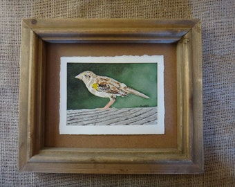 Grasshopper Sparrow Original Watercolour Painting