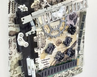 Paleontology: Recycled computer part assemblage