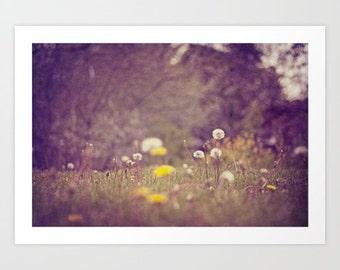 nature photo- landscape- romantic- dandelions- purple- yellow- fine art photography- wall art-home decor