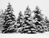 Winter Landscape Photography - Black and White Tree Art Prints - Winter Tree Art - Winter Prints - Extra Large Wall Art - Ski Lodge Decor