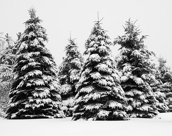 Winter Landscape Photography - Black and White Photography - Extra Large Tree Wall Art - Winter Rustic Art Prints - Ski Lodge Decor