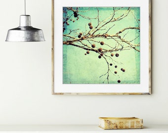 Botanical photography print robins egg blue seed pods rustic wall art - Sycamore Pods