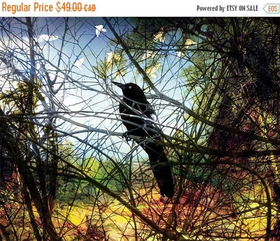 On Sale Nature, Fine Art Print, Giclee Archival Print, Photomontage, Collage, Painted Photographs, Home Decor, Wall Art, Bird, Garden
