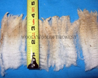 Dorset cross, 3.5 lbs. RAW  white fleece from Ewe #14, a medium handle with Loft and Luster