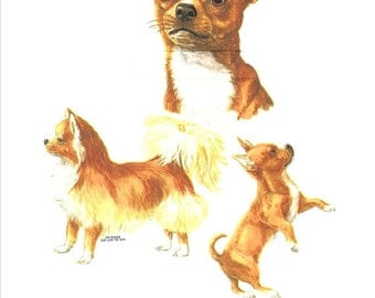 """CHIHUAHUA Smooth MultiDogs on ONE 18"""" x 22"""" Fabric Panel to Sew. Actual picture is 12"""" x 15"""" on white background."""
