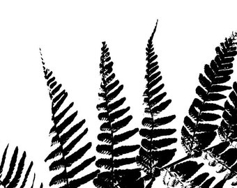 Botanical Wall Art, Black White, Nature Print, Fern