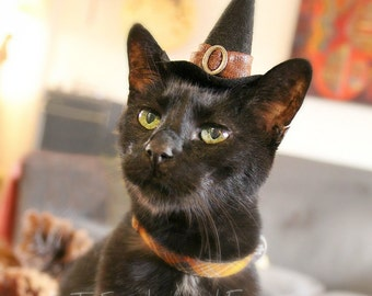 Pet Costume - Cat Costume - Witch Hat - Good Witch - Cat Halloween Costume - Pet Halloween Costume