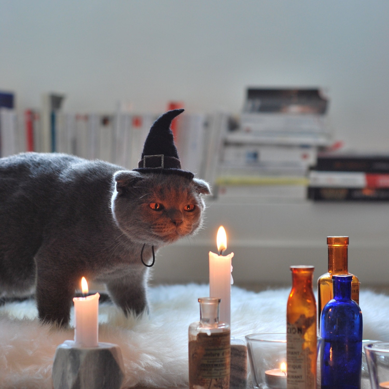Cat Costume Witch Hat Hissy Witch Cat Halloween Costume