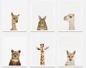 Baby Animal Nursery Art Prints. Bear Cub Little Darling. Safari Animal Print. Animal Nursery Decor. Baby Animal Photos.