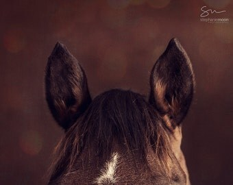 Horse Photography, Horse Detail, Horse Poster, horse photography, fine art equine photography, Horse Print, Horse Picture, Horse Ears
