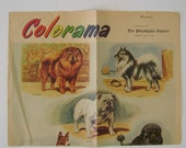 Vintage Colorama Dog Breeds from the Philadelphia Enquirer Newspaper dated May 14, 1954 Double Sided