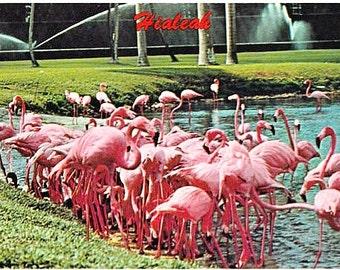 Vintage Florida Postcard - Pink Flamingos at Hialeah Park Racetrack (Unused)