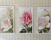 1926 Roses Tobacco Cards by W.D.& H.O. Wills No. 37-39