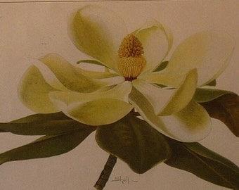 Vintage - Magnolia and Violets- Flower Lithographs - vibrant color prints - Spring pick me up