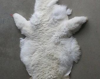 Jumbo Alpaca Hide- White and Long Fibered Hide Lot No. 1500379R