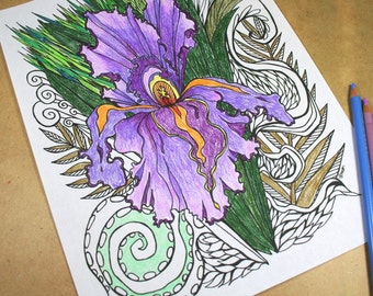Adult Coloring Page . Printable Digital File Download . Zen Coloring Art . Iris Flower Color Page