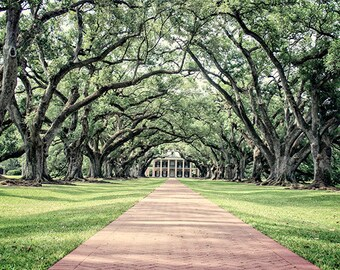 "Louisiana Plantation ""Oak Alley"" Photograph. Affordable Fine Art. Antebellum Romantic Trees."
